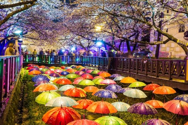 Jinhae Cherry Blossom Festival (1)